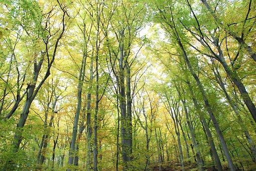 Forest, Trees, Mood, Light, Mystical, Sunlight, Leaves