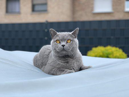 Cat, Sweet, Pet, Mackerel, Animal, Domestic Cat, Fur