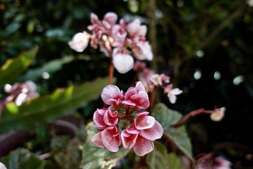 Flower, Blossom, Plant, Nature, Pink, Flora, Garden