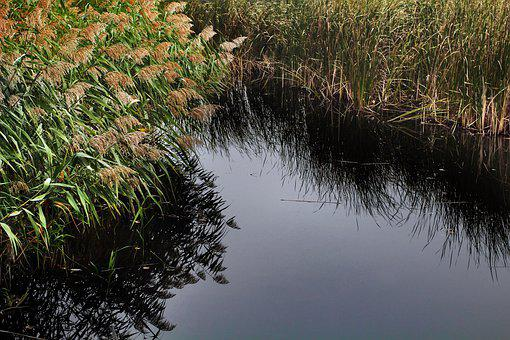 Scrubs, Wetlands, Cane, Pond