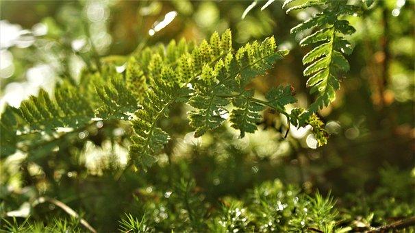 Forest, Sunlight, Autumn, Magic, Ferns, Mystical