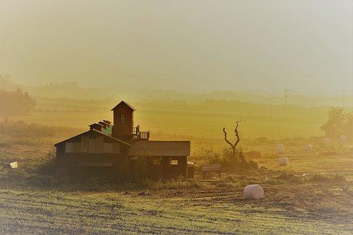 Ranch, Morning, Fog, Cow, Hay, Autumn, Sunrise