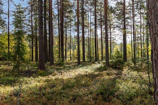 Mariannelund, Sweden, Landscape, Nature, Scandinavia
