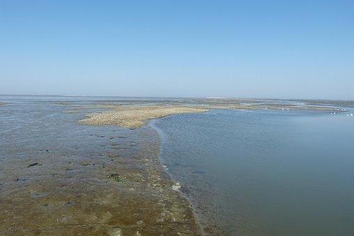 North Sea, Mudflat Hiking, Wadden Sea, Watts, Low Tide