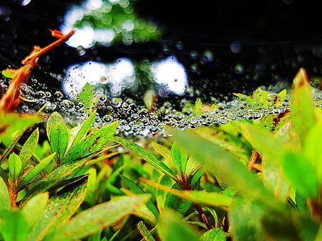 Trickle, Non, Water, Spider Web, Wet, Nature, Plants