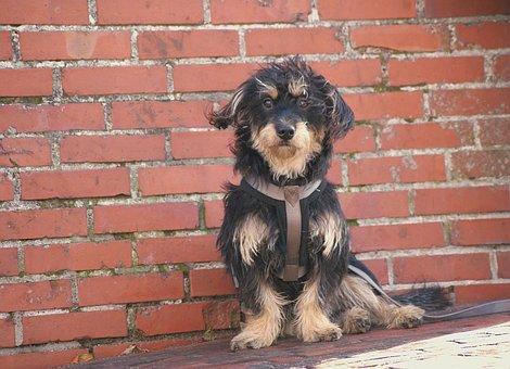 Dog, Hybrid, Pet, Animal, Mixed Breed Dog, Attention