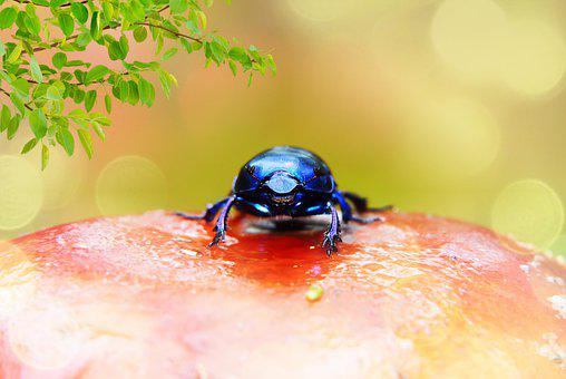 Forest Beetle, Insect, Antennae, The Head Of The