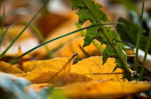 Foliage, Autumn, Orange, The Sun, Nature, Colorful