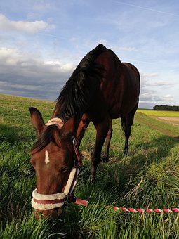 Horse, Pony, Graze, Autumn, Sky, Grass, Sun, Halter