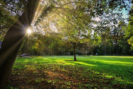 Forest, Autumn, Landscape, Nature, Scenic, Idyllic