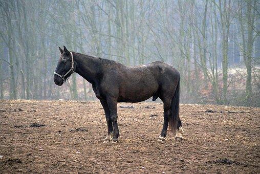 Horse, Pasture, Autumn, Nature, Landscape, Rural
