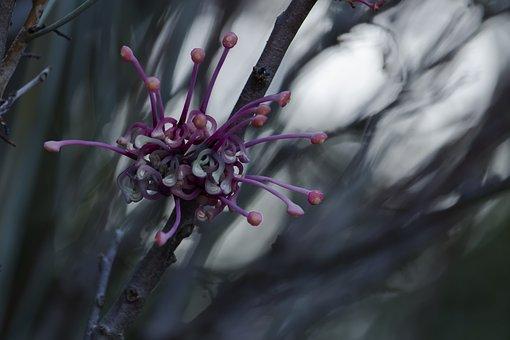 Flower, Magenta, Botany, Blooming, Blossom