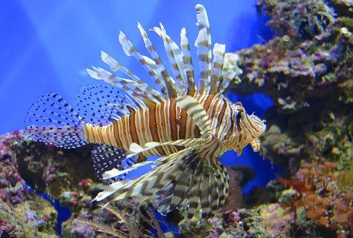 Fish, Aquarium, Sea, Blue, Swim, Water