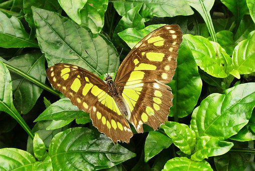 Butterfly, Butterfly Garden, Nature, Bug, Wings, Color