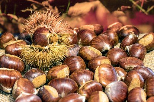 Wild Chestnuts, Chestnuts, Wild, Chestnut, Brown