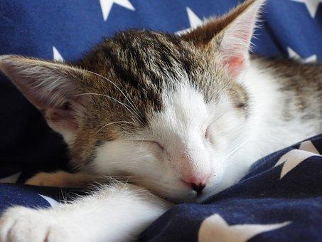 Cat, Dachowiec, Animal, Kitten, Animals, Sweet