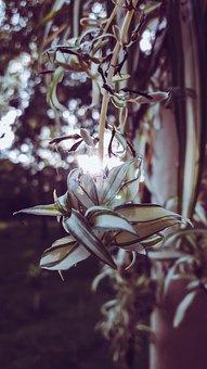 Plants, Natural, Sun, Nature, Summer, Flower