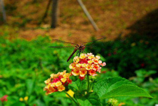 Insects, Butterfly, Autumn, Flowers, Nature, Animal