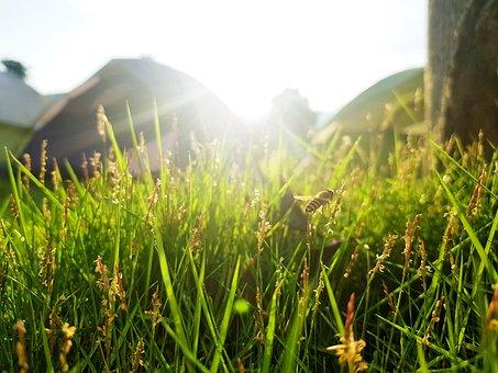 Animal, Bee, Sun, Light, Insect, Summer, Will, Garden