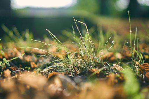 Grass, Leaves, Dew, Moist, Wet, Drip, Sunset, Green