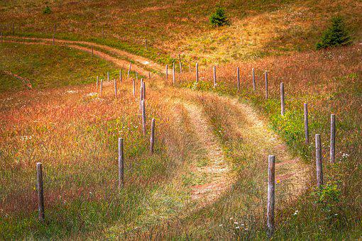Hiking, Away, Meadow, Field, Fence, Road, Trail