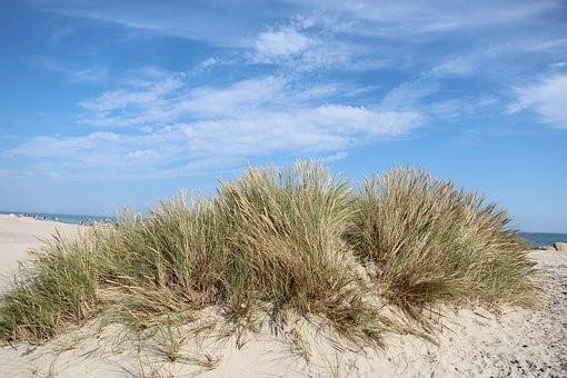 Denmark, Summer, Sol, Sunshine, Branch, Dunes, Holiday