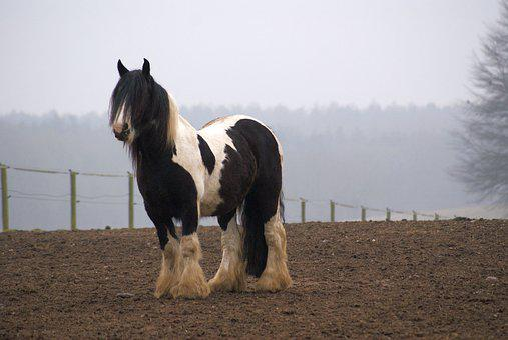 Horse, Pasture, Winter, Field, Landscape, Horse Head
