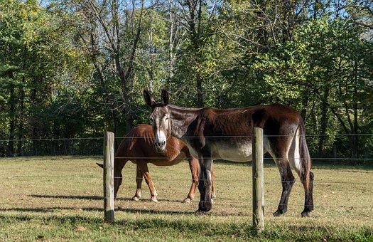 Horses, Nature, Animal, Equine, Mare, Brown, Landscape