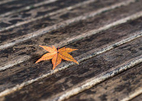 Maple Leaf, Autumn, Fall, Nature, Orange, Leaves