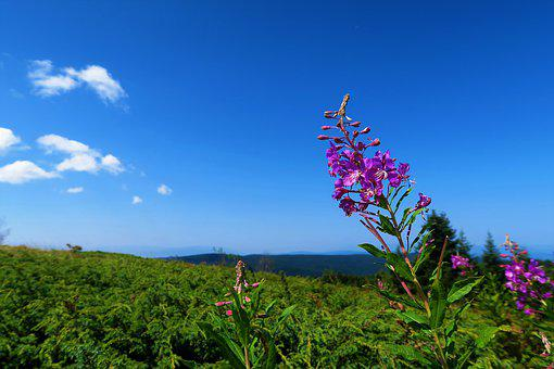 Flower, Forest, Nature, Clouds, Plant, Beautiful, Blue