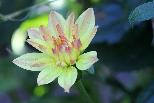 Flower, Garden, Yellow, Pink, Red, Orange, Green