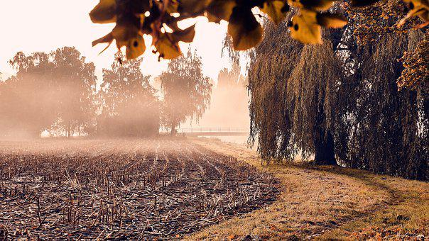 Autumn, Fog, Arable, Trees, Away, River
