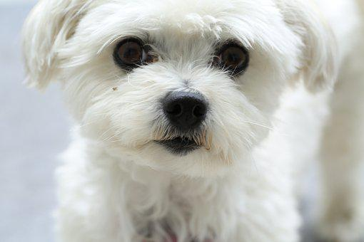 Dog, Snout, Eyes, Pet, Animal Portrait, Animal, Face