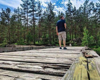 Forrest, Dog, Colorful, Season, Landscape, Sweden