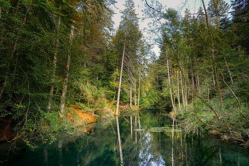 Forest, Lake, Pond, Mirroring, Water Storage, Autumn