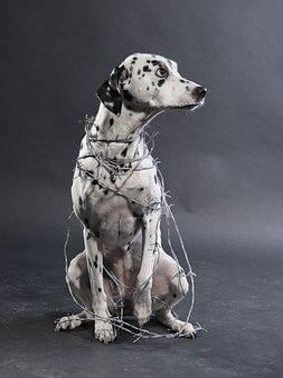 Dog, Dalmatians, Animal Torturer, Abuse, Fur