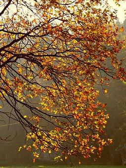 Autumn, Foliage, Scenically, Autumn Gold