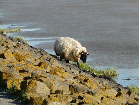 Sheep, Dike, North Sea, Alone, Climb, Breakwater