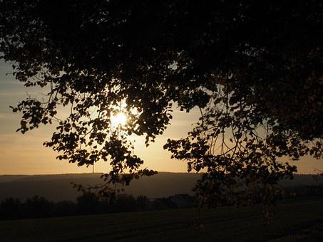 Tree, Sunset, Autumn, Evening Light, Leaves, Sun