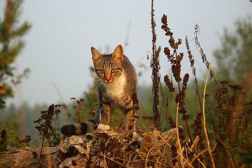 Cat, Mieze, Kitten, Tiger Cat, Mackerel, Domestic Cat