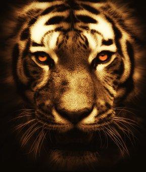 Cat, Tiger, Animal, Wildlife, Wild, Nature, Mammal, Zoo