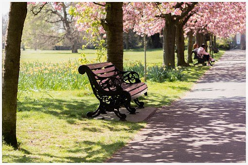 Park, Bench, Nature, Spring, Blossom, Outdoor, Sitting
