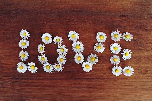 Daisy, Word, Love, Text, Valentine's Day, Relationship