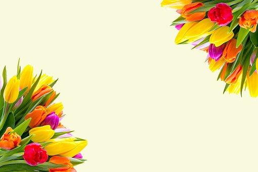Tulips, Flowers, Spring, Floral, Spring Flowers