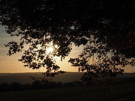 Tree, Sunset, Autumn, Evening Light, Leaves, Sun