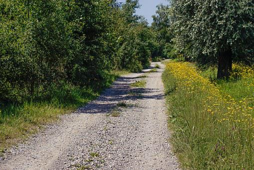 Way, Tree, Flowers, Shoulder, Dirt Road, Sunny Day