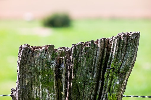 Fence, Wire, Pasture, Meadow, Pile, Fence Post, Wood