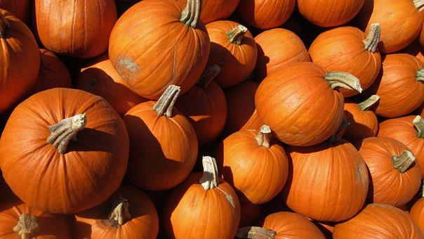 Pumpkin, Food, Harvest, Autumn