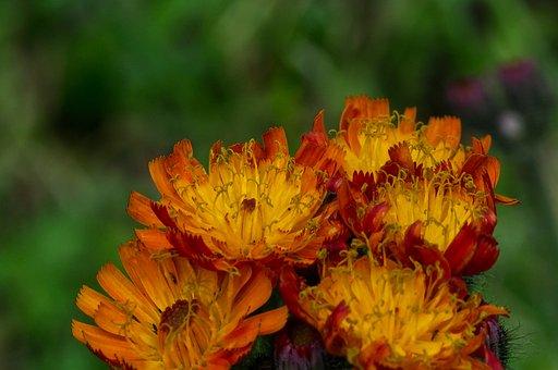 Flower, Blossom, Bloom, Nature, Plant, Summer, Petals