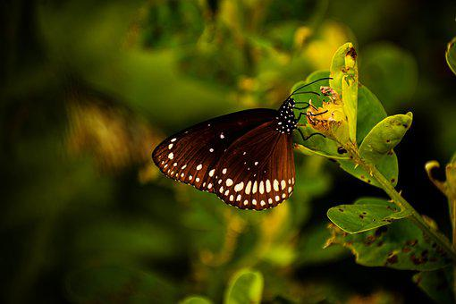 Butterfly, Bird, Insect, Wildlife, Nature, Plant